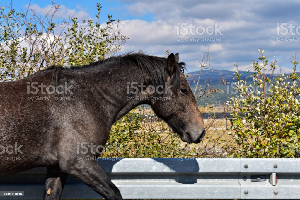 Beautiful Black Wild Horse In The Nature Stock Photo Download Image Now Istock
