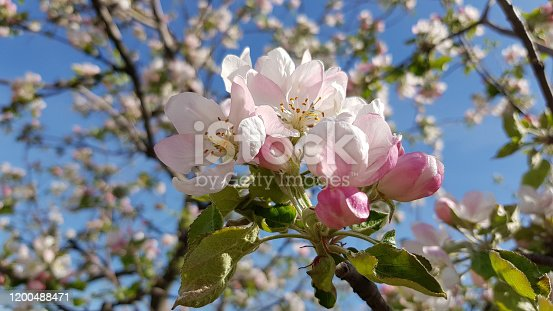 Floral backdrop. Blooming flowers close-up. Natural blossom backgrounds. Springtime and summertime natural colors.