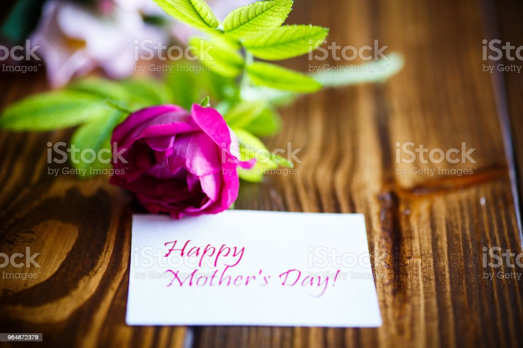 beautiful blooming roses and a greeting card for the mother royalty-free stock photo