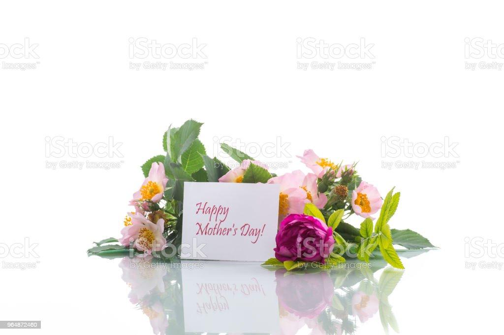 美麗綻放的玫瑰和賀卡為母親 - 免版稅傳統園林圖庫照片