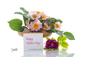 istock beautiful blooming roses and a greeting card for the mother 992828510