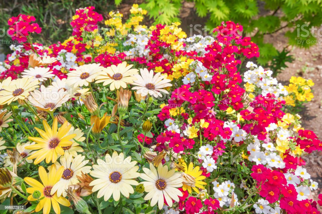 Beautiful Blooming Spring Flowers On The Nature Garden Background In Spring Stock Photo Download Image Now Istock