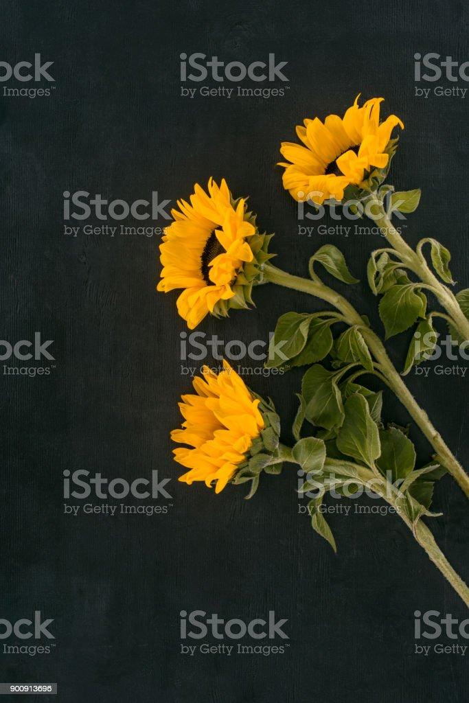 Текст из учебника по английскому sunflowers