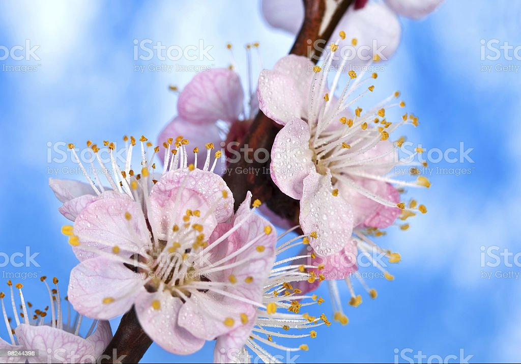 Beautiful blossom flower royalty-free stock photo