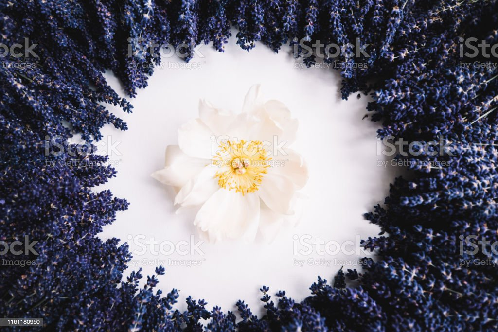 Beautiful Blossoming Lavender Flowers Making An Empty Circle Filled With Pale Peony Flower Top View Flat Lay Stock Photo Download Image Now Istock