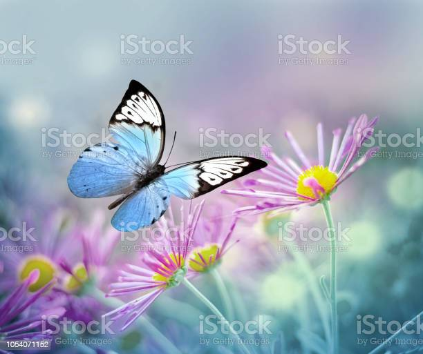Beautiful blue butterfly and pink flowers summer and spring picture id1054071152?b=1&k=6&m=1054071152&s=612x612&h=tiqa1gg7ncrb2xa fgtd7cu1pguu0vuhsvarv2pv1h8=