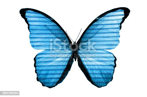 999676880 istock photo beautiful blue butterfly isolated on white background 955299384