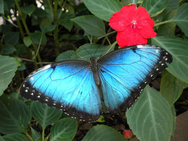 Beautiful Blue Butterfly stock photo