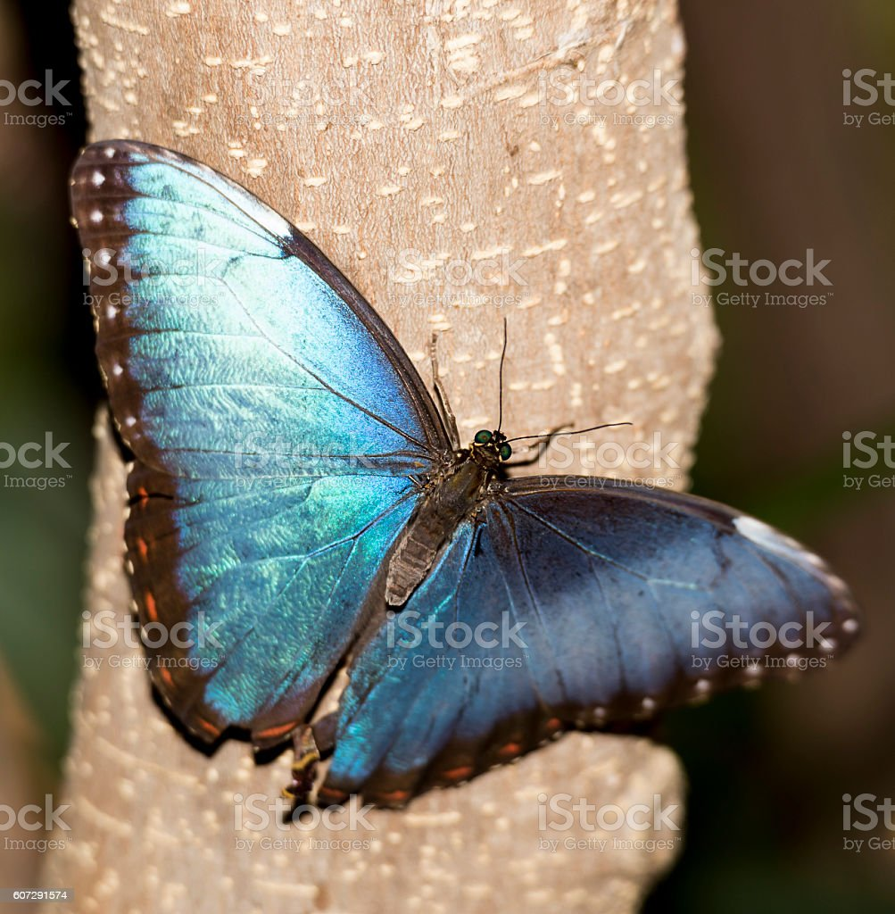 Beautiful blue butterfly stock photo