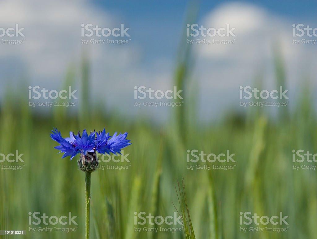 Hermosa azulejo azul - foto de stock