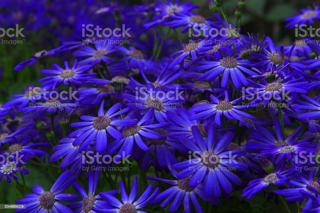 Beautiful Blue flowers stock photo