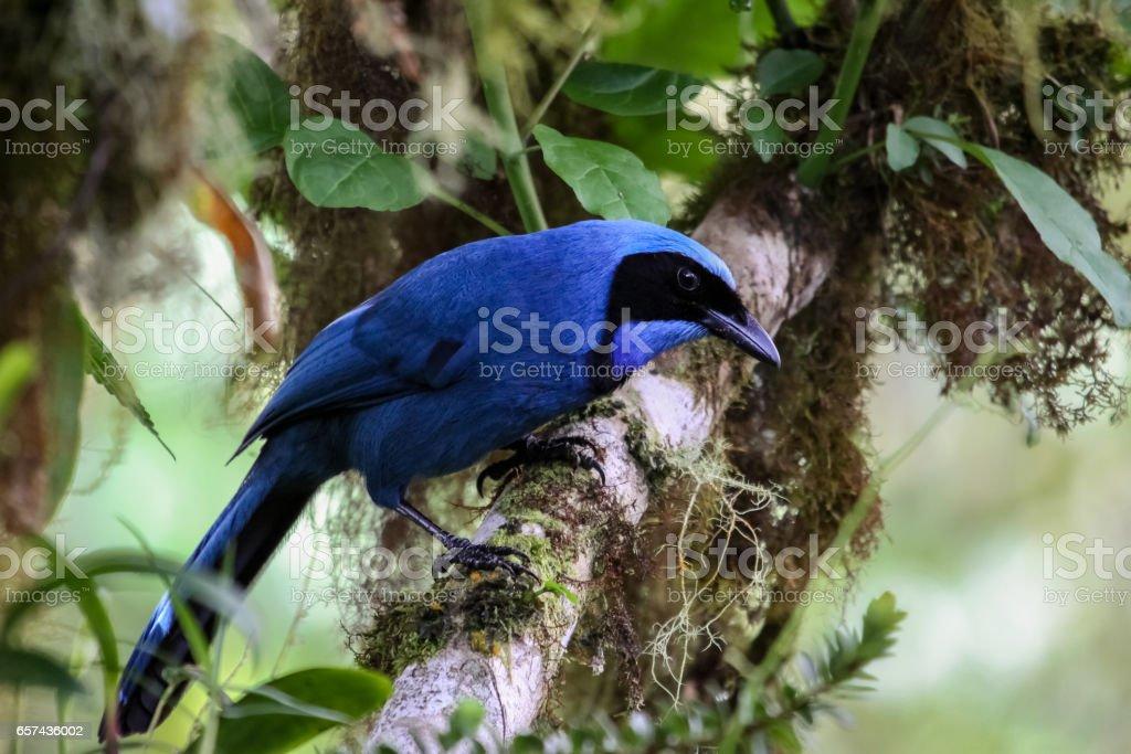 Beautiful blue Jay perching on a branch stock photo