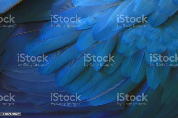 Photo of Beautiful blue macaw feathers.