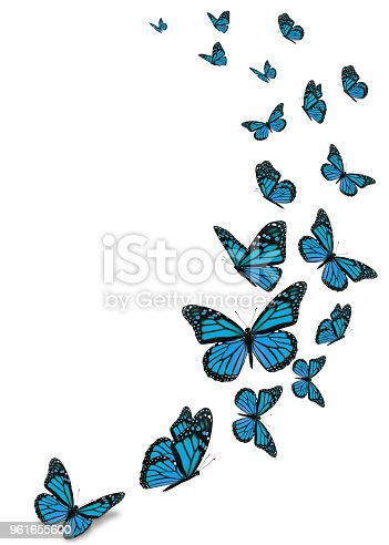 Beautiful blue monarch butterfly isolated on white background.