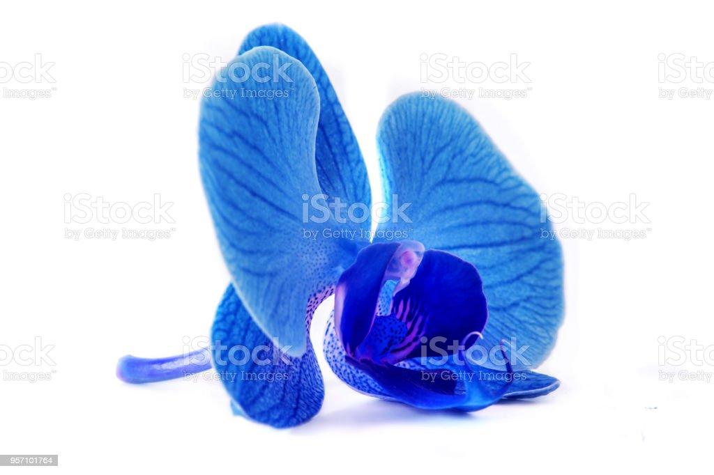Wunderschöne Blaue Orchidee Ohne Hintergrund Leuchtend Blaue