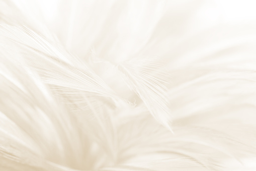 Beautiful blur white -brown feather pattern texture background