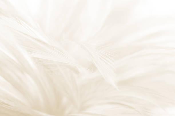 beautiful blur white -brown feather pattern texture background - штриховой рисунок стоковые фото и изображения