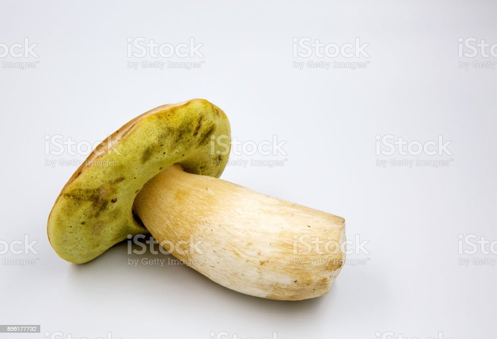 Beautiful boletus (Boletus edulis) isolated on white background stock photo