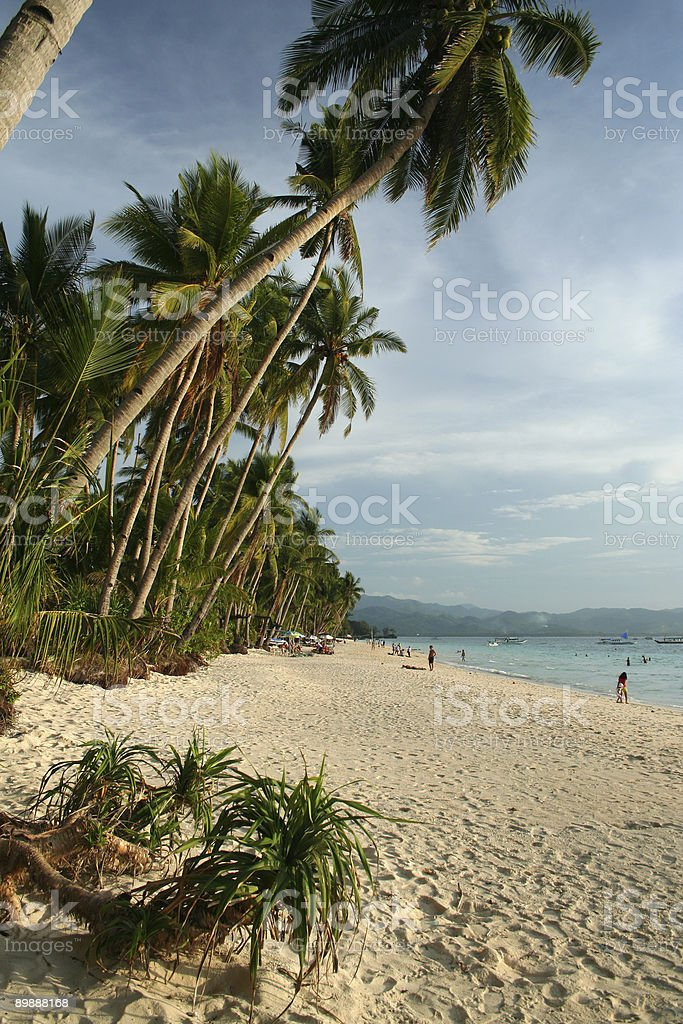 beautiful boracay beach tropical palm trees royalty-free stock photo