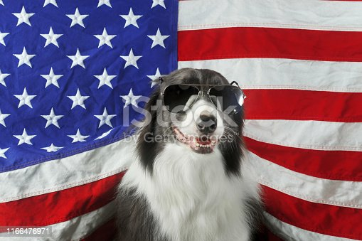 509363072istockphoto Beautiful border collie in front of a USA flag with sunglasses 1166476971