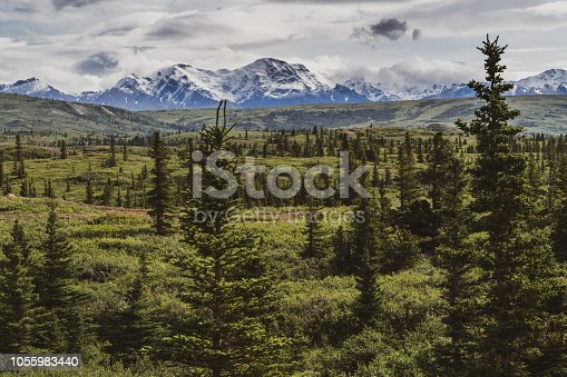 Beautiful boreal forest along the Richardson Highway shows the Delta Mountain Range