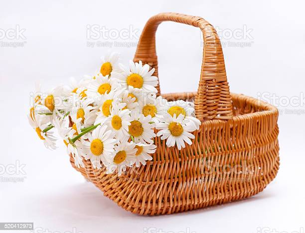 Beautiful bouquet of chamomile in wicker basket isolated on whit picture id520412973?b=1&k=6&m=520412973&s=612x612&h=oxxxew9z zf4rr2hnongxooszikh3hxpd0zqkwdbrwu=