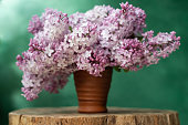 Beautiful bouquet of lilac flowers in a ceramic glass.