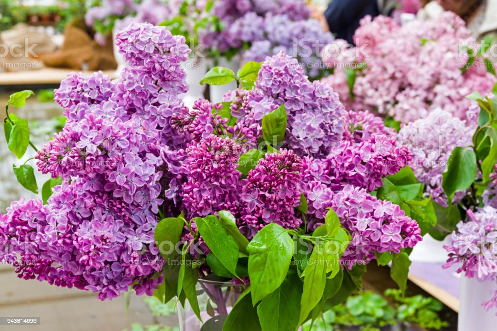 Beautiful bouquet of lilac stock photo