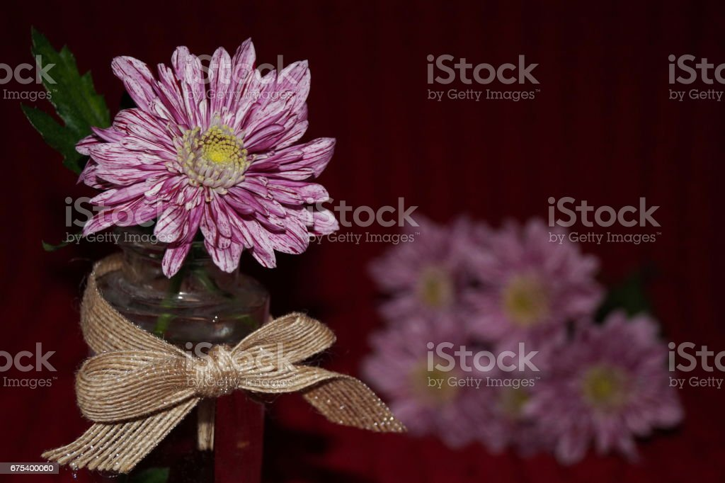 Beautiful bouquet of pink chrysanthemums royalty-free stock photo