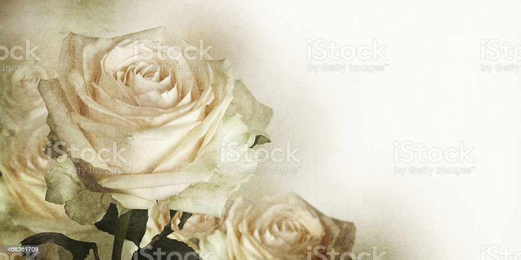 Beautiful bouquet of rose. royalty-free stock photo