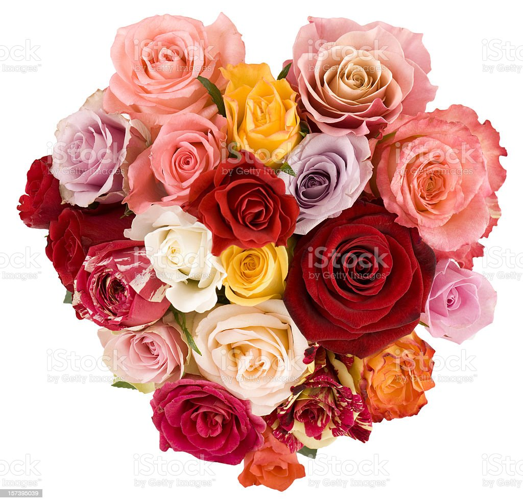 Beautiful bouquet of roses royalty-free stock photo
