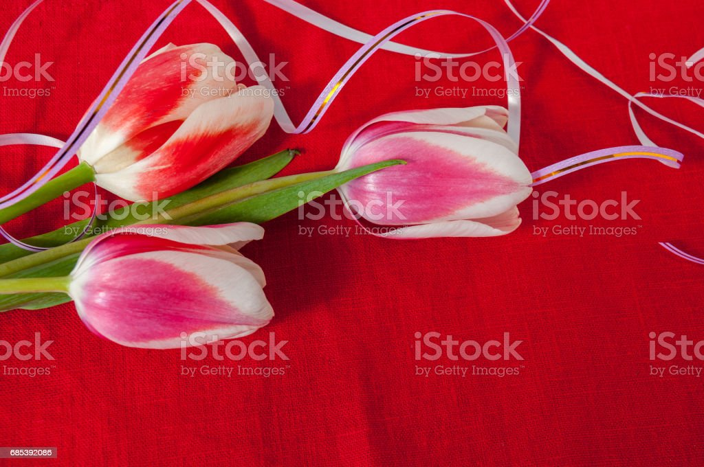 Beautiful bouquet of tulips on a red background zbiór zdjęć royalty-free