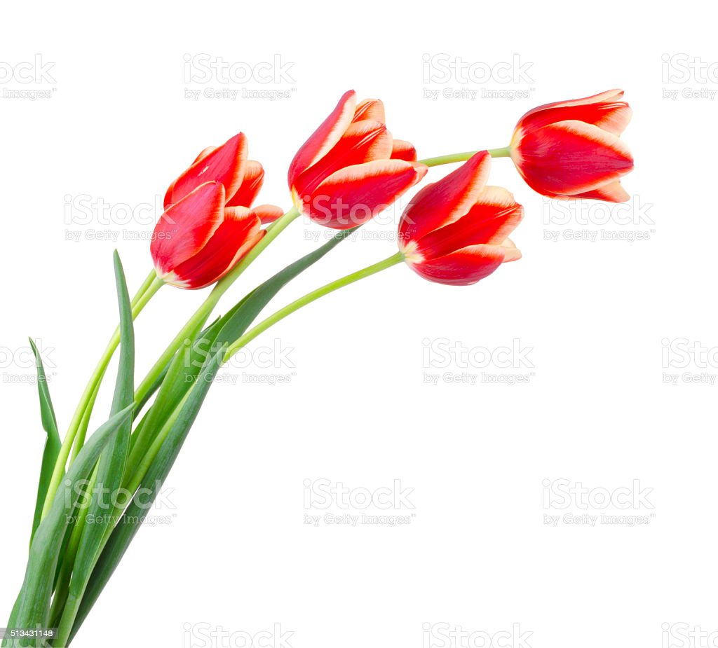Beautiful bouquet of tulips on a white stock photo