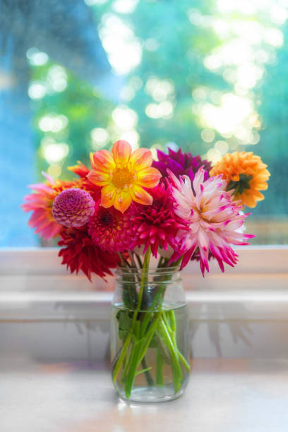 Beautiful bouquet of vibrant colorful dahlia flowers in a glass jar vase. Indoors in front of window in farmhouse. Vertical Floral background image. stock photo
