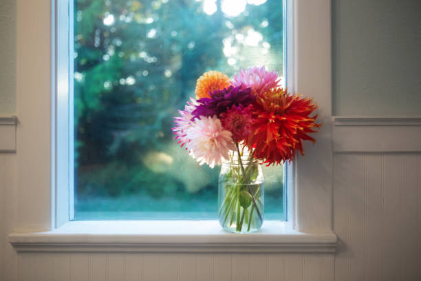 Beautiful bouquet of vibrant colorful dahlia flowers in a glass jar vase. Indoors on windowsill in farmhouse. Horizontal Floral background image. stock photo