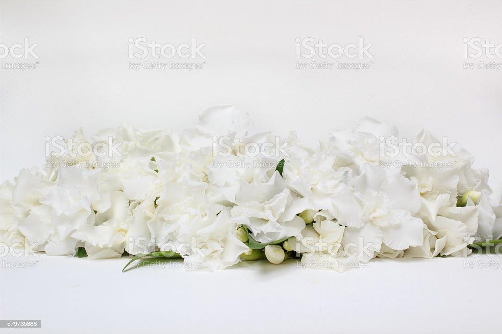 Beautiful bouquet of white budding Gardenia jasminoides flower or...
