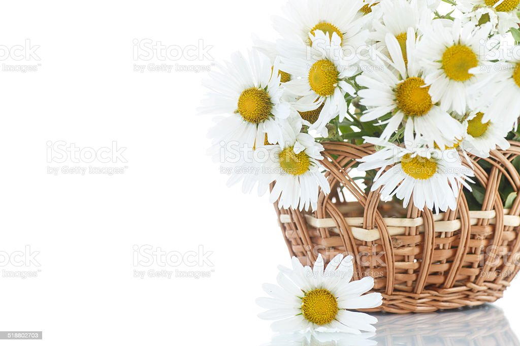 beautiful bouquet of white daisies stock photo