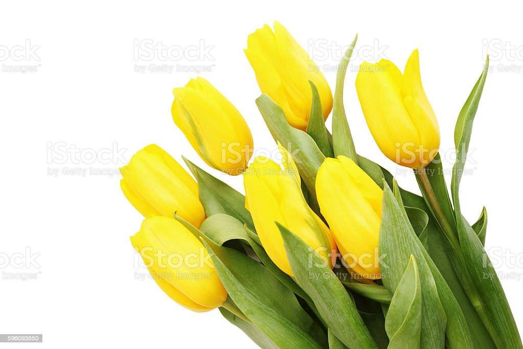 beautiful bouquet royalty-free stock photo