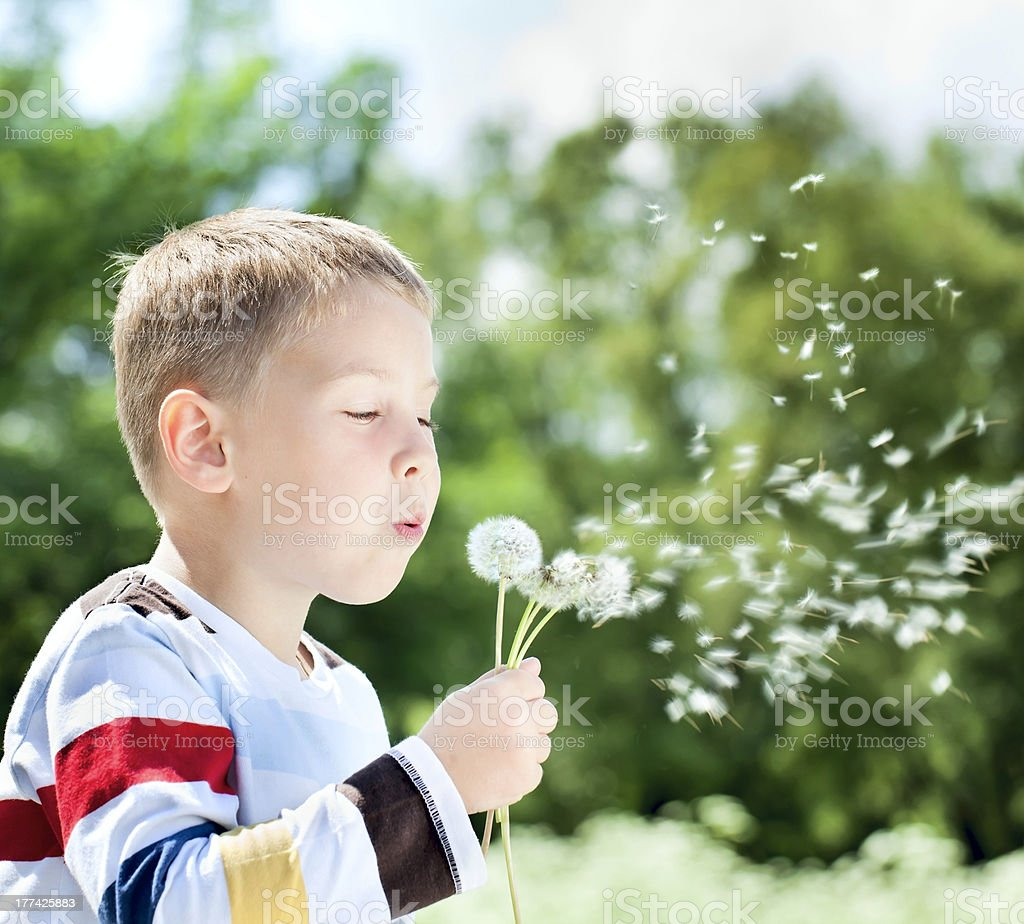 Beautiful Boy in the park blowing on dandelion royalty-free stock photo