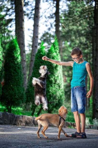Beautiful boy with his best friends-dogs People and pats. Dog. Children.Very Shallow DOF. Developed from RAW; retouched with special care and attention; Small amount of grain added for best final impression. 16 bit Adobe RGB color profile. designer baby stock pictures, royalty-free photos & images