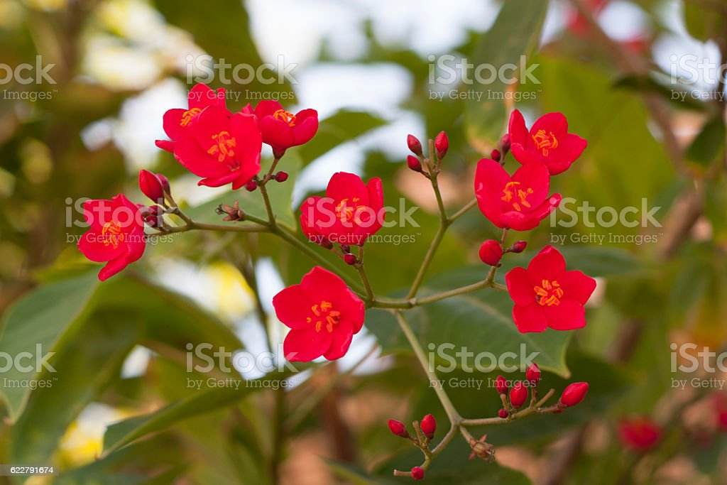 Beautiful Branch with red flowers photo stock photo