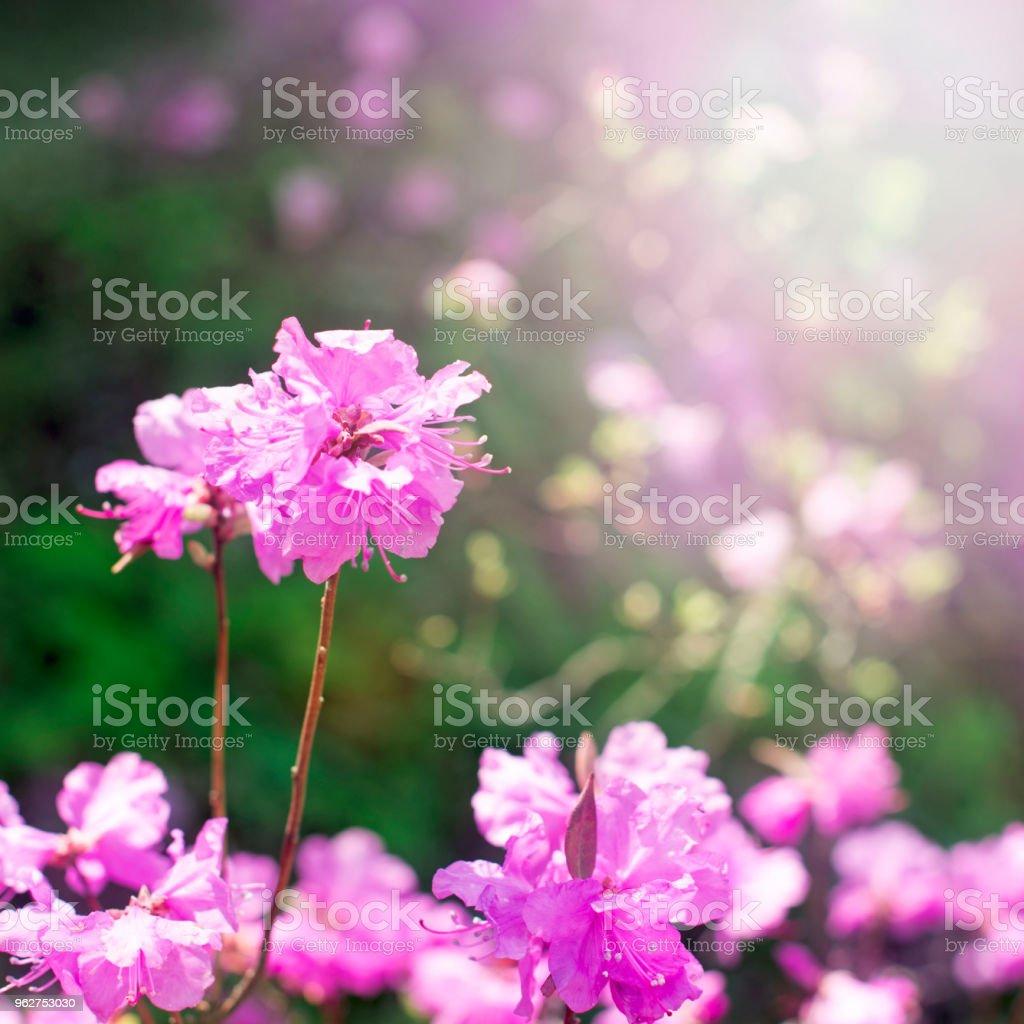 Lindos ramos com alecrim flores no fundo do céu. - Foto de stock de Alecrim royalty-free