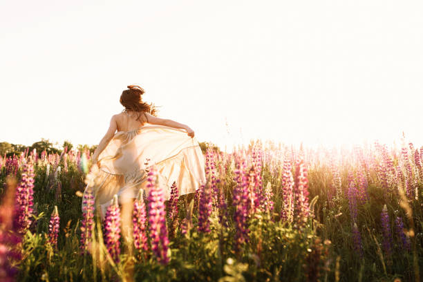 A beautiful bride in wedding dress dancing alone in field of lupine flowers on sunset. View from the back A beautiful bride in wedding dress is dancing alone in a field of wheat. View from the back sun shining through dresses stock pictures, royalty-free photos & images