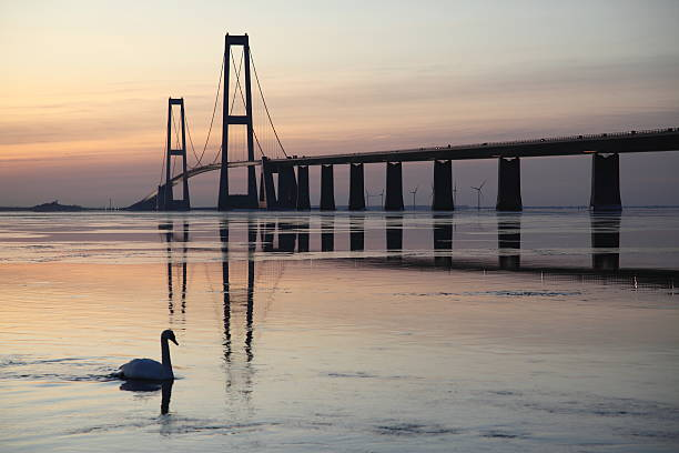 A beautiful bridge at sunset with a swan in the water A swan and Storebælt (Great Belt) the strait between Zealand and Funen in Denmark and the longest suspension bridge span in Europe just after sunset. pejft stock pictures, royalty-free photos & images