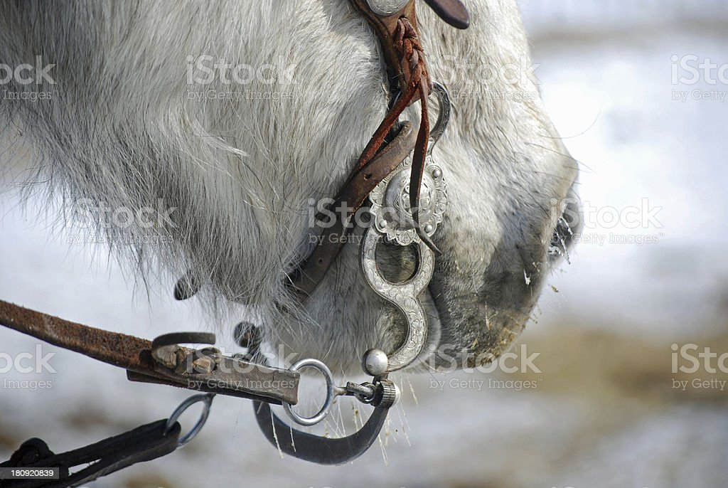 Beautiful Bridle With Silver Bit On Steel Grey Horse Stock Photo Download Image Now Istock