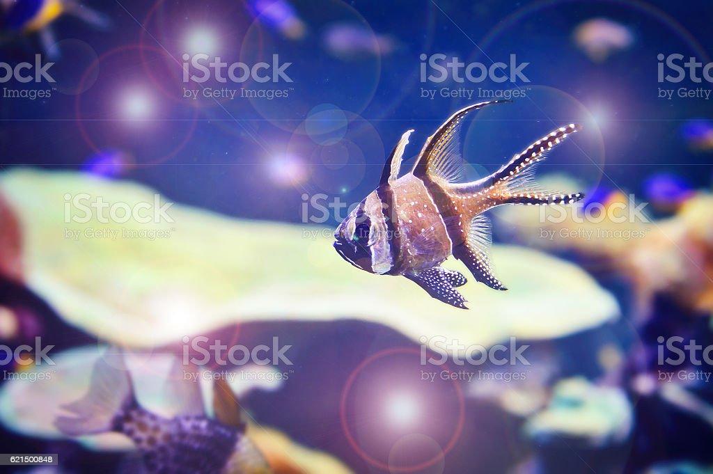 Beautiful bright aquarium fish. foto stock royalty-free