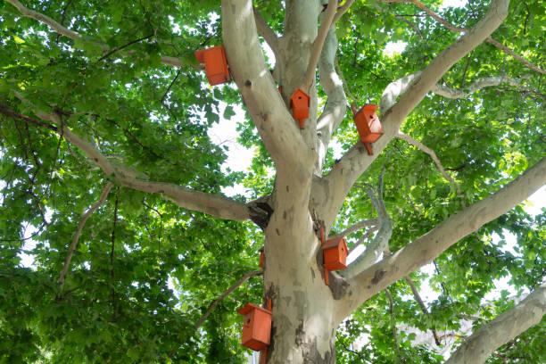 schöne leuchtend orange vogelhäuser auf der platane. - urbanara stock-fotos und bilder