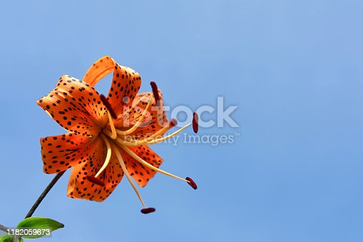 Flower close up. Floral background. Selective focus. there is a place for text