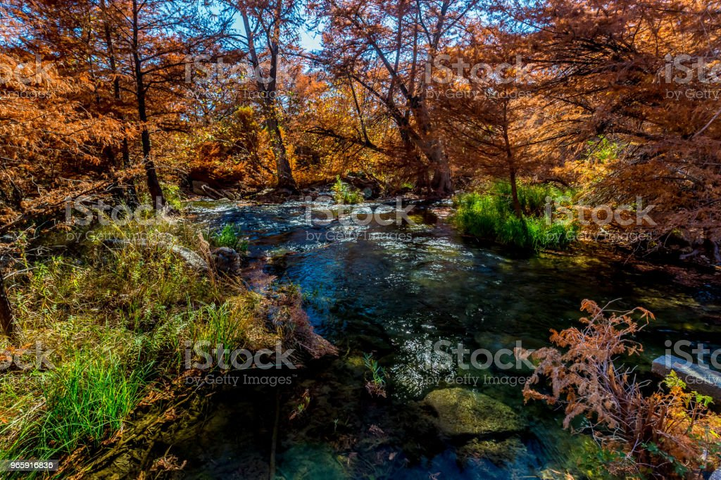 Mooi helder oranje Fall gebladerte aan de rivier van de Guadalupe, Texas. - Royalty-free Bald Cypress Tree Stockfoto