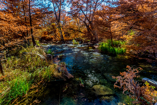 Mooi Helder Oranje Fall Gebladerte Aan De Rivier Van De Guadalupe Texas Stockfoto en meer beelden van Bald Cypress Tree